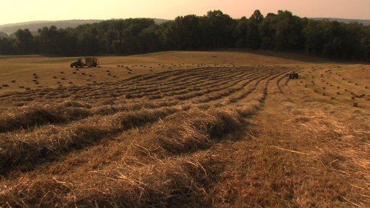Harvesting hay in the Worthington Valley